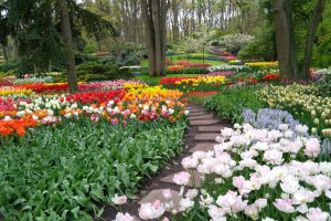 Excursión privada al parque de tulipanes de Keukenhof desde Ámsterdam ©Joost Pals