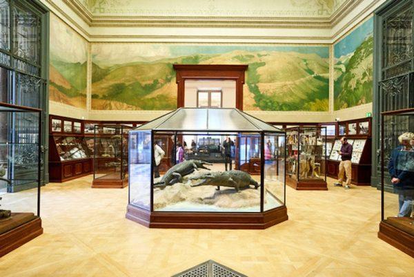 Visiter le Musée royal de l'Afrique central - Bravo Discovery