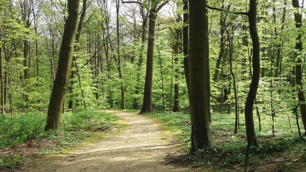 Parc La Forêt de Soignes-Bravo Discovery